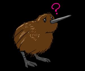 confused kiwi